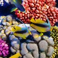 Coral reefs support a high diversity of plant and animal life.