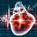 Human heart and cardiogram