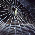 Leucauge sp. spider on her web