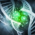 How blood cell genetic variations impact on common diseases