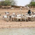 Niger wetlands